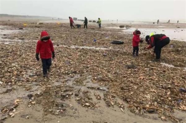 帝国金业:英国风暴刚过,一大波龙虾海产被冲上岸......