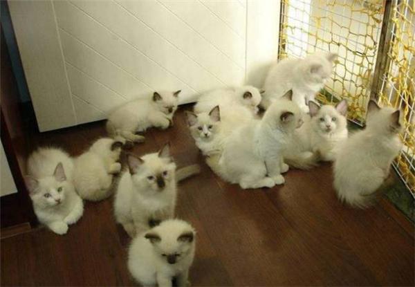 帝国恒源:买房当猫宅?国外这些宠物才是动物界赢家!